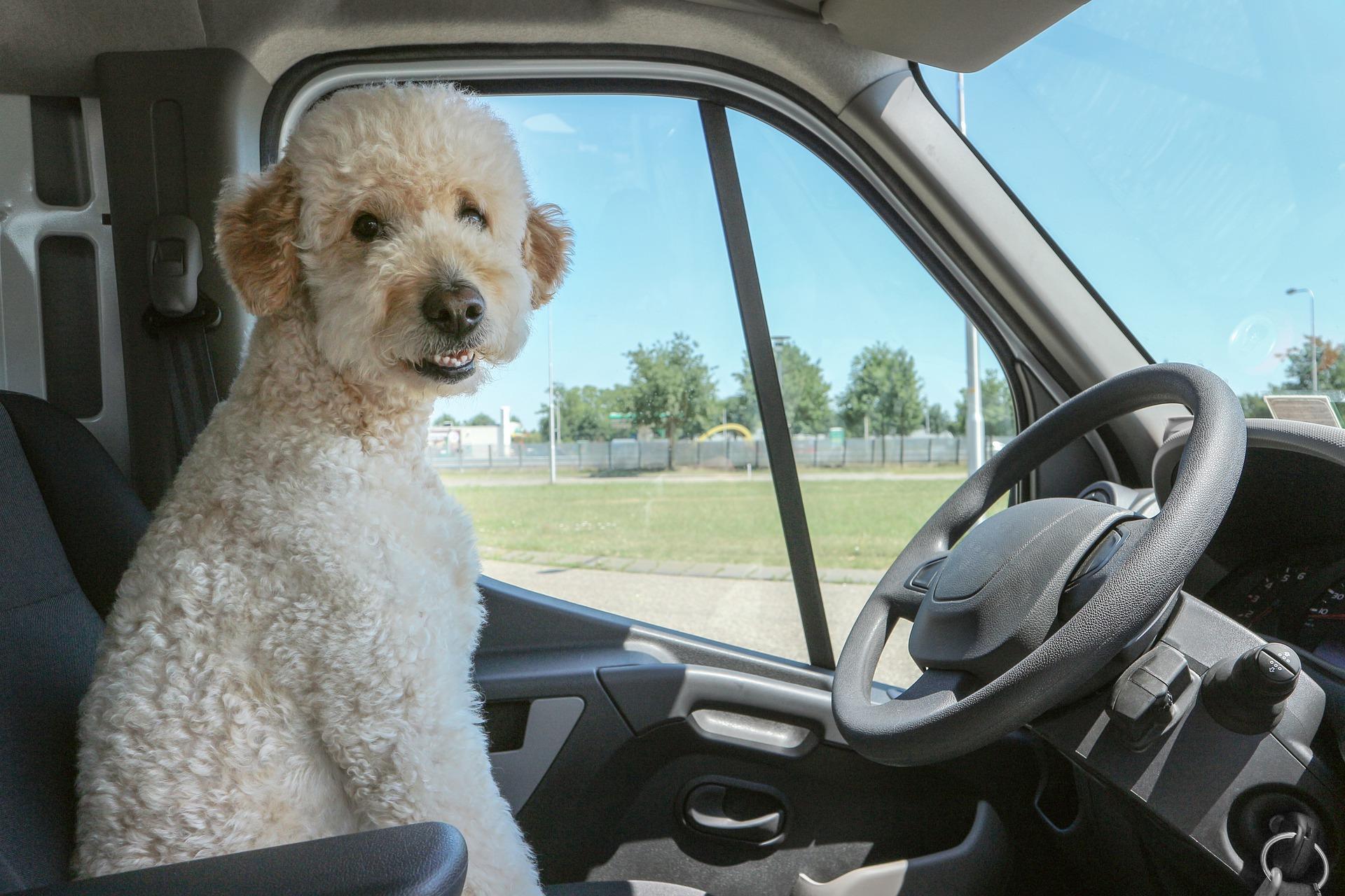 【運転免許のヒミツ】アメリカで日本の免許証が失効しても大丈夫