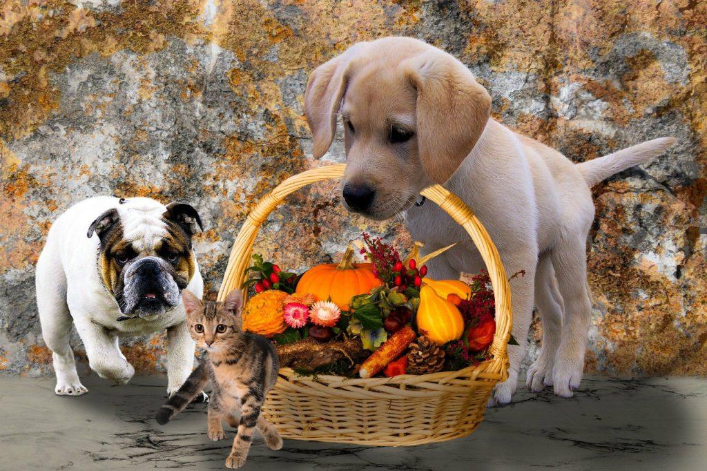 サンクスギビング(Thanksgiving)はアメリカのどんな祝日?