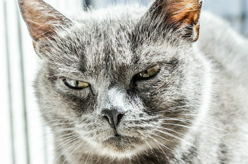 「怒りの感情」がどんな悪影響を及ぼすのか?